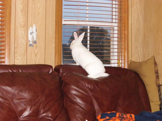 Former foster Sparky has a sofa with a view!