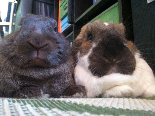 Phobos (formerly Count Chocula) with his girlfriend Willow