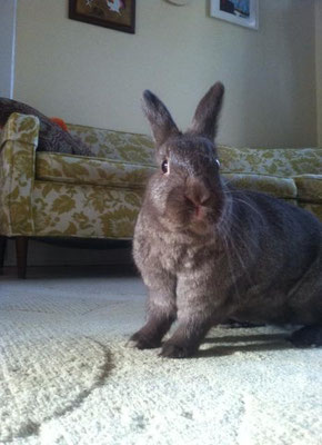 Former foster Phobos (once known as Count Chocula) has a stylish sofa of his own!
