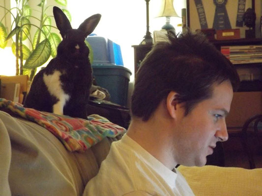 Former foster Penny just loves letting Dan use her couch to study!
