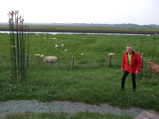 Der Mann und die Schafe