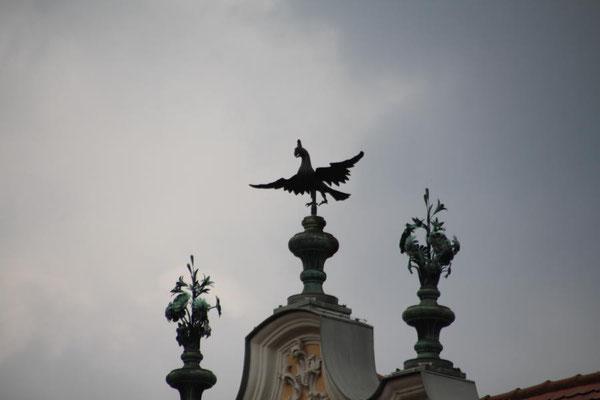 """Der """"Falke"""" vom Falkenhaus"""