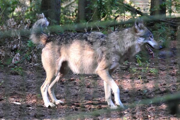 27 Wolfcenter