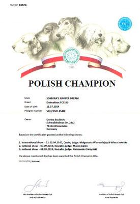Polnischer Champion Somora´s Junipder Dream N/hu Titel erhalten 30.10.2019