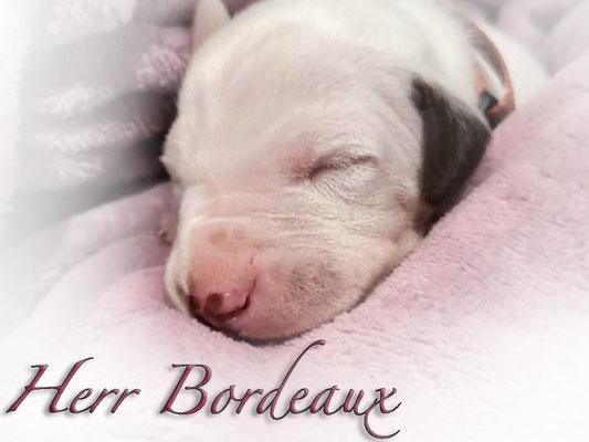 Somora`s U....Herr Bordaux...7 Tage alt...28.06.2021
