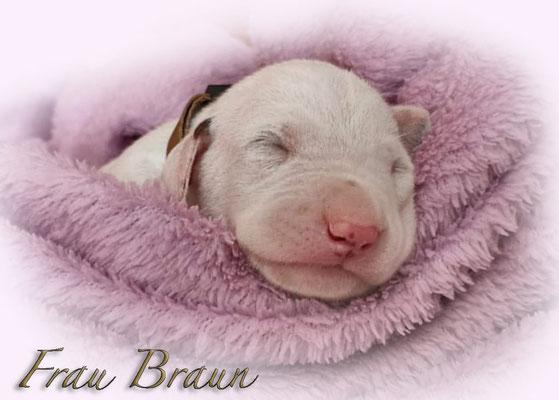 Somora`s U....Frau Braun...7 Tage alt...28.06.2021
