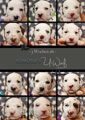 Somora`s Uchen....21 Tage alt (3.Woche)...04.07.2021
