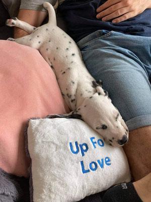 Somora´s Up For Love (N/hu) Cody im neuen Zuhause...18.08.2021