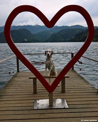 Mein Herzchen...Somora´s Juniper Dream am Bleder See in Slowenien...25.06.2017