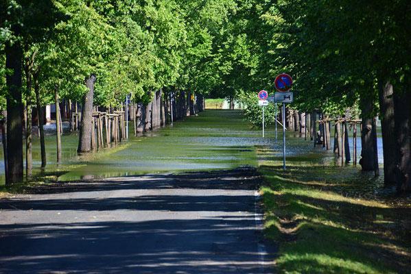 Richtung Koppel sinkt das Gelände ab und das Wasser steht noch deutlich höher...