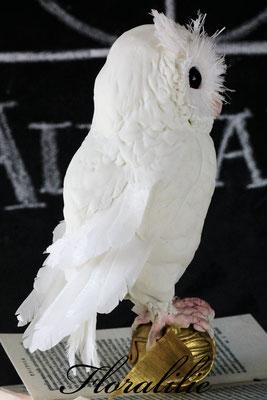Weiße Eule aus Fondant und Wafer Paper | Floralilie Sugar Art