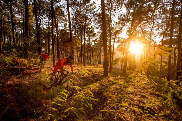 Alle Focus Fully und Hardtail e-Mountainbike Modelle 2019