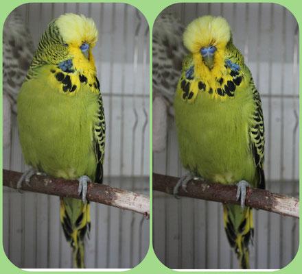 Пьер - серо-зеленый классический