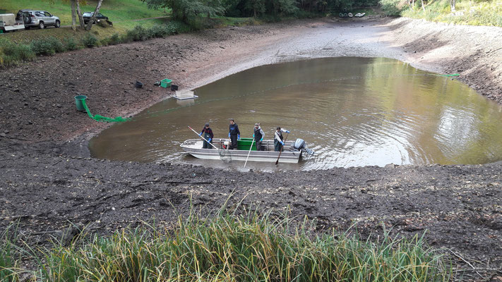 Fischentnahme in einem Wasserrückhaltebecken mittels Elektro- sowie Zugnetzfischerei