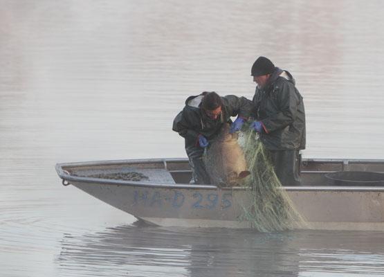 Fischbestandsaufnahme mit Stellnetzen