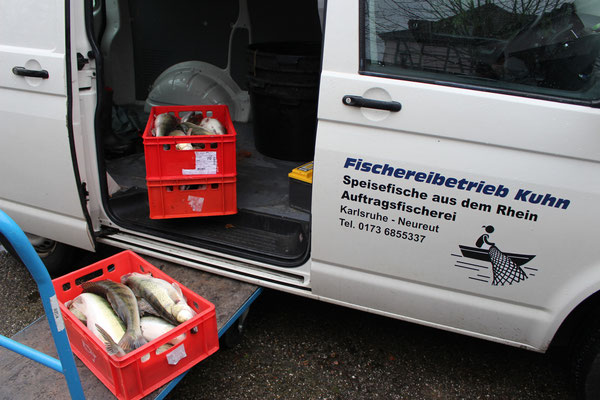 Ausliefern der Fische
