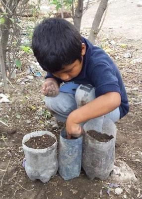 「子供の森」計画で勉強した 種まきを自宅で実践!