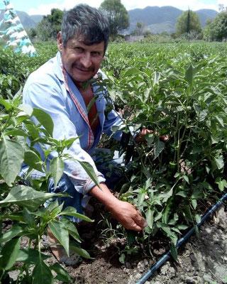 オイスカ・メキシコからの協力を得て、 農業技術を学び、今回野菜を提供 してくれた現地の住民
