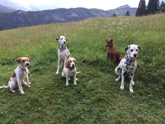 Bente mit Hundekumpels