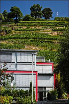 The Schlossberg hill, beside the Black Forest hostel