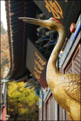 Bird at the entrance of the Nan Yan Temple, Wudangshan