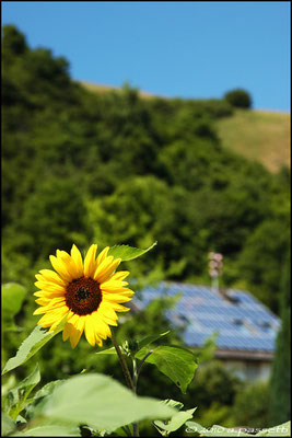 """""""Connected to the sun"""", Kaiserstuhl (North-West of Freiburg)"""