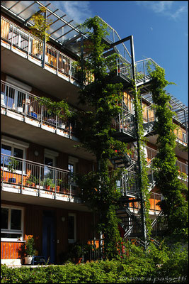 Green on the passive houses in Vauban