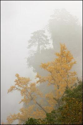 Nanyan zone in the deep fog, Wudangshan