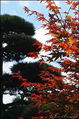 Japanese garden nearby Seepark