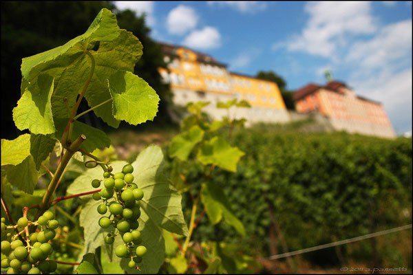 Vineyard in Meersburg, a nice town on the Bodensee (Lake Constance)