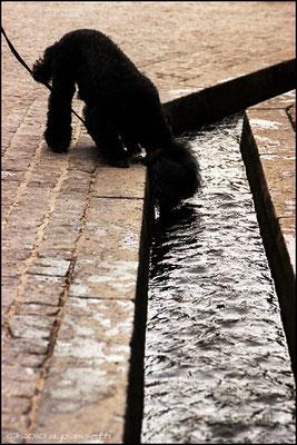 Dog and Bächle
