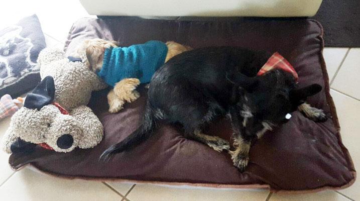 Ich muß mein Bett mit drei !!! Hunden teilen !