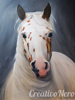 """Pony of the Americans, """"Sunny after Storm"""", 80x60 cm, Foto: Theresa Marx"""