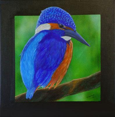 "Eisvogel, ""Kingfisher"", 40x40 cm, Acryl und Airbrush"