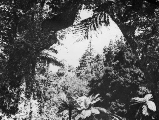 Der Garten von Monserrat.