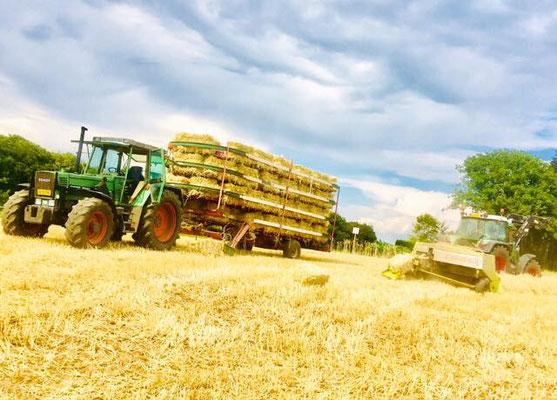 Fendt Traktoren in der Strohernte