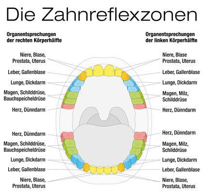 Zahn-Organ-Verbindungen