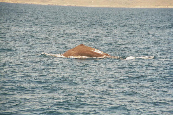 Whale Watch Tarifa