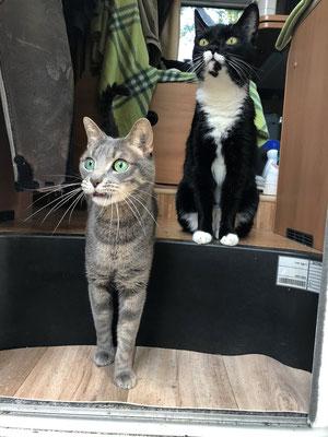 Leon und Felix