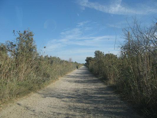Straße nach Beauduc