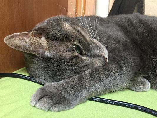 sehr Müde