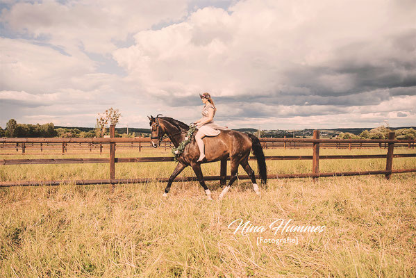 Pferdefotografie in Köln / Pferdefotograf in Köln / Pferdefotos / Pferdebilder / Pferde