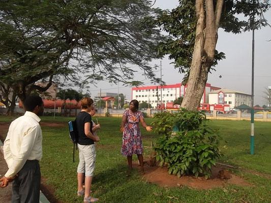 Bezoek aan het museum; de boom die eeuwig leeft.