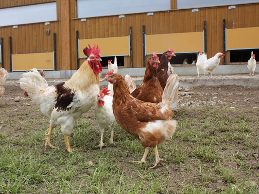 Hühner Bio-Matte