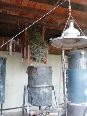 Chargement manuel du Bleuet dans la cuve, distillation Solaure