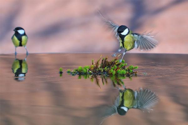 Vögel Dürig Gärten