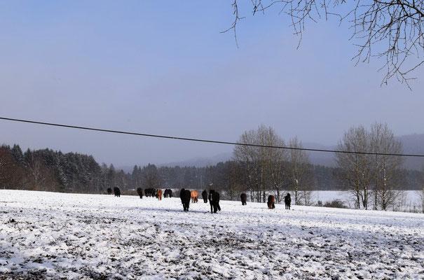 Die Stuten genießen das kalte und klare Wetter...