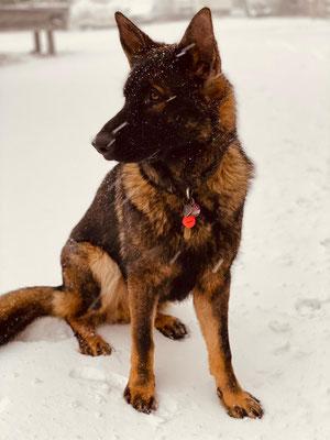 Der erste Winter für den Schnee-Prins