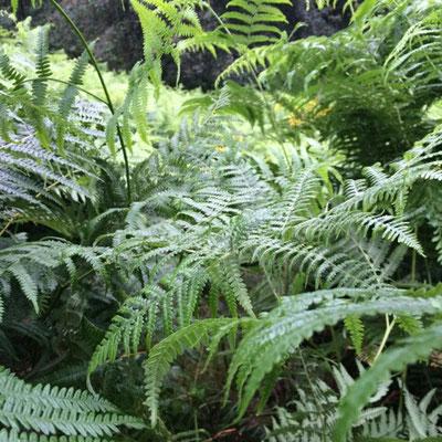 Dschungel???