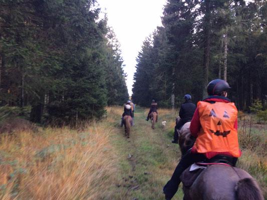 im Hochwald unterwegs